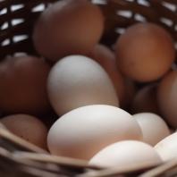 Osada Dębowo, jajko, zaraz zrobię z ciebie jajecznicę
