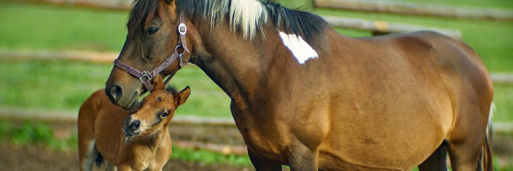 Konie, jazda konna, nauka jazdy konnej, zwierzęta gospodarcze, kozy, kury