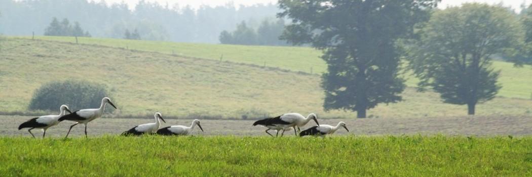 Ptaki, obserwacja ptaków, bociany, czaple
