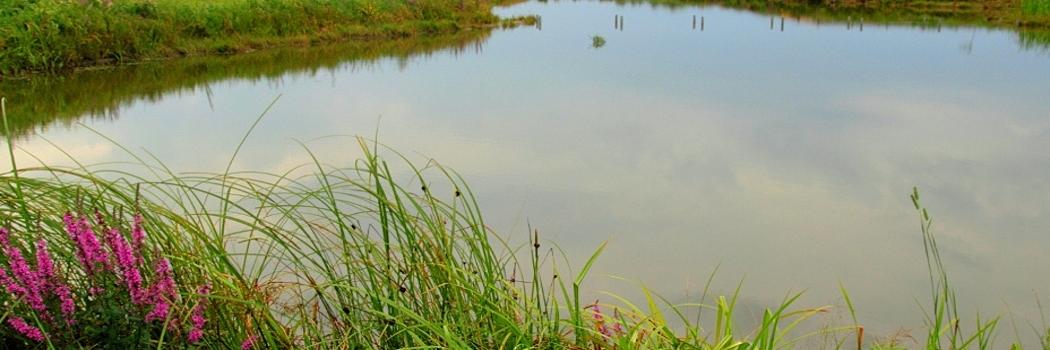 Jeziora, stawy, woda, sporty wodne, kajaki, wycieczki kajakowe, łowienie ryb